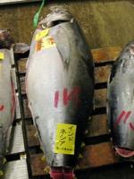 Tsukiji tuna (c)2006 AEC