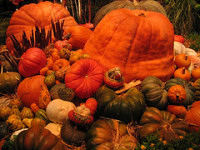 Bellagio pumpkins (c)2006 aec