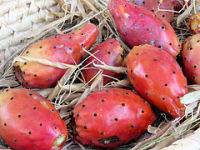 prickly pears (c)2006 AEC