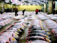 tsukiji (c)2005 CTC