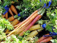 carrots (c)2007 AEC